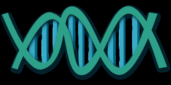 Genoma umano sintetico, convegno segreto a Boston secondo il New York Times