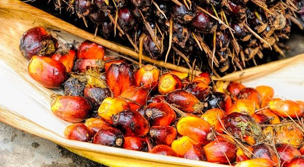 Olio di palma dannoso oppure non fa male Nuovo studio su effetti sulla salute