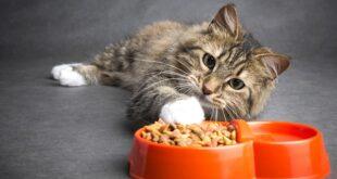 mangime gatto